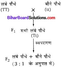 Bihar Board Class 10 Science Solutions Chapter 9 अनुवांशिकता एवं जैव विकास