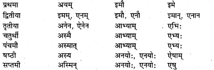 Bihar Board Class 7 Sanskrit व्याकरण शब्दरूपाणि 18