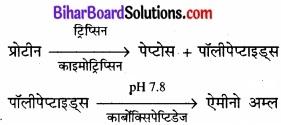 Bihar Board Class 11 Biology Chapter 16 पाचन एवं अवशोषण