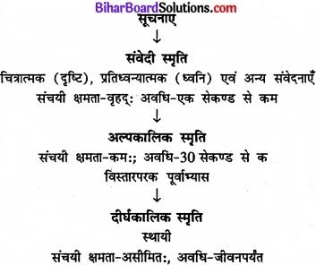 Bihar Board Class 11 Psychology Solutions Chapter 7 मानव स्मृति img 2